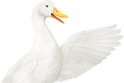 Aflac America S Most Recognized Supplemental Insurance Company