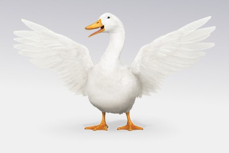Aflac duck with wings spread