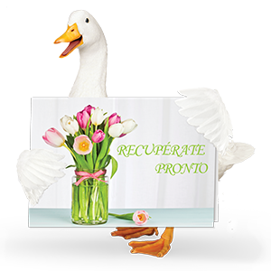 Aflac duck with get well soon card